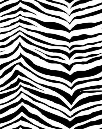 Zebra – 1241